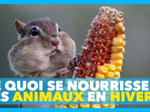 Sciences CM : De quoi se nourrissent les animaux l'hiver ?